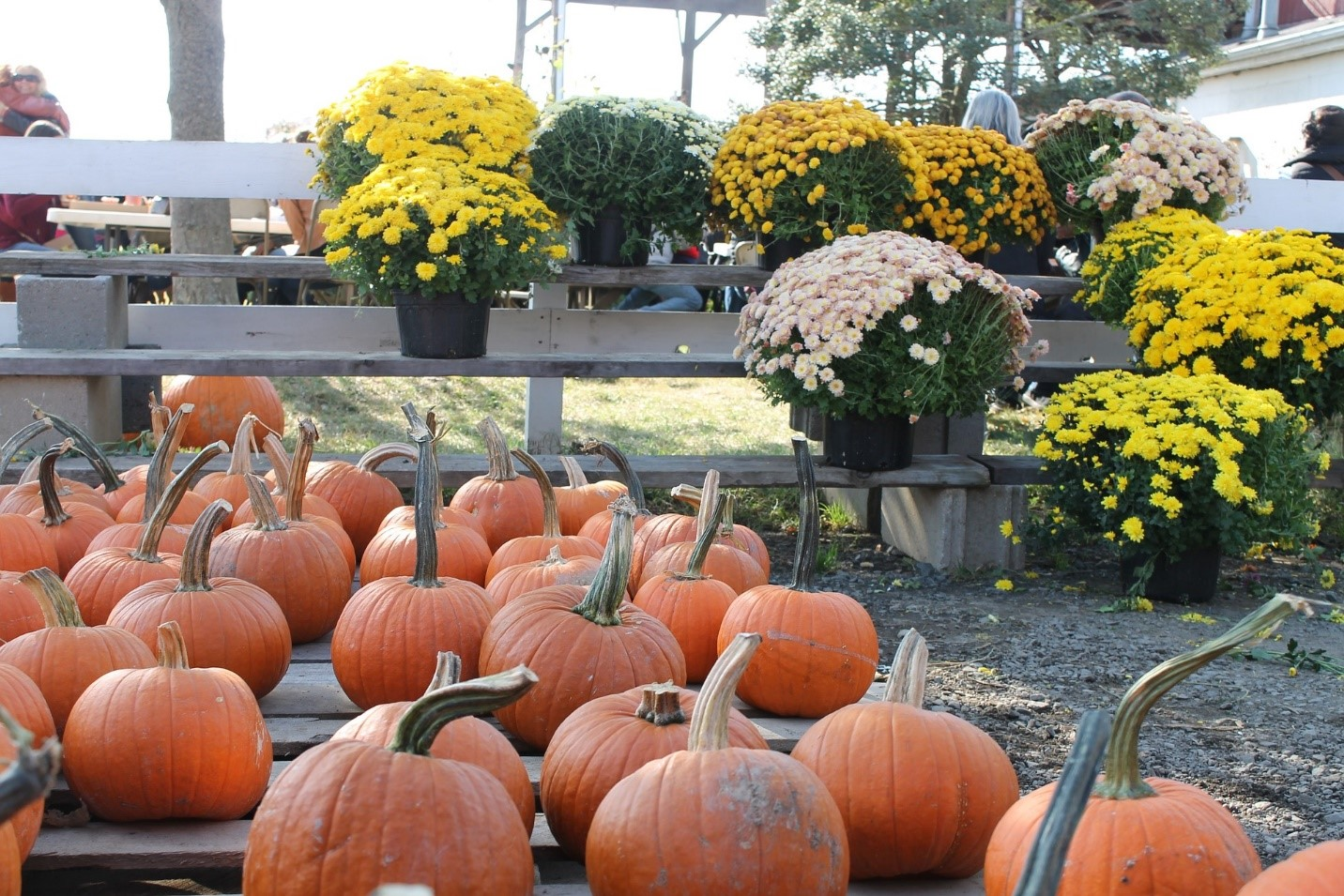 Fall Festivals on the South Shore